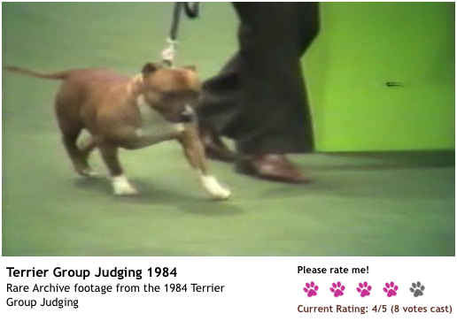 1984crufts_stafford.png