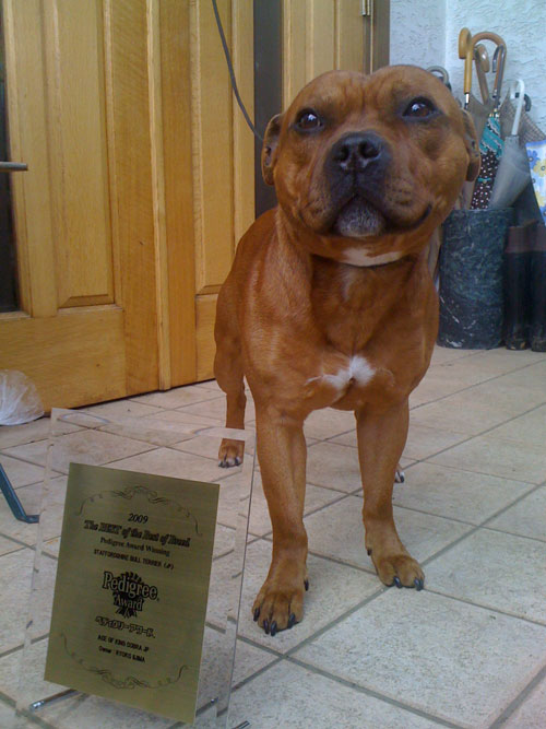 Ginger pedigree award 2009