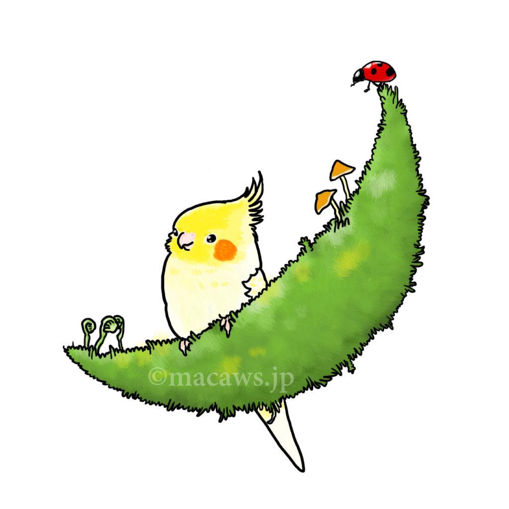 lutuno_pearl_cockatiel_macaws.jp